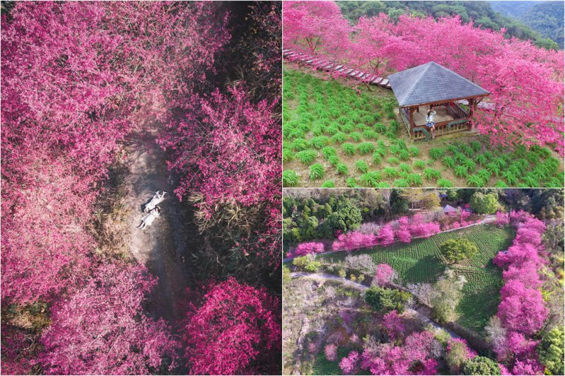 圖/IG@plant_hui授權、圖/攝影師飛翔在天際授權