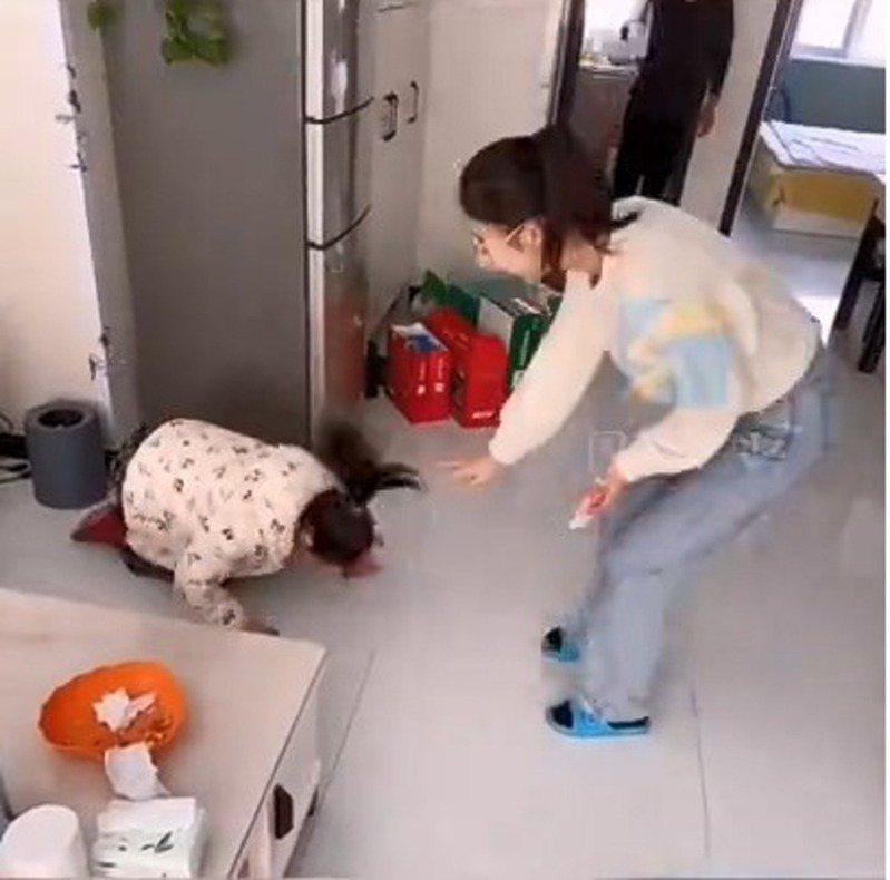 山東1名阿姨開玩笑稱每磕1個頭就會發100元人民幣紅包,外甥女於是二話不說立即跪下磕頭。圖/網上短片截圖