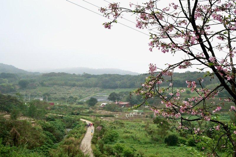 三生步道,底端的大坑溪口橋,梯田農田。