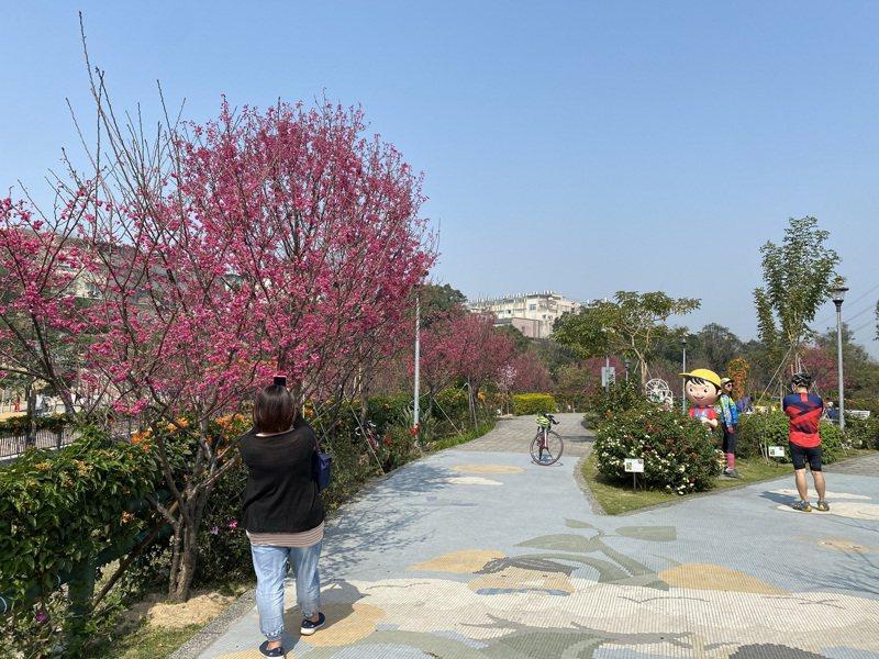 園內櫻花種類眾多,自1月起陸續開花至4月初。圖/新北市景觀處提供