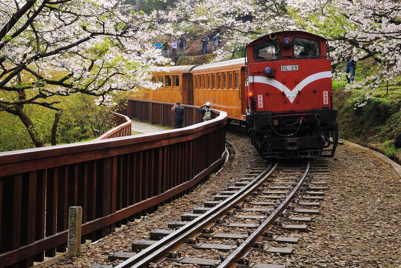搭乘森林小火車欣賞櫻花,也是阿里山的人氣行程之一。圖/易遊網提供