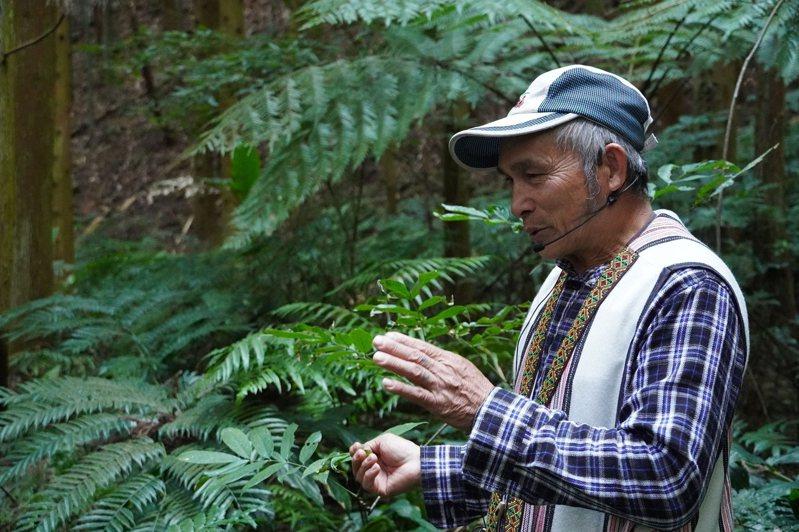 活動將邀請泰雅族耆老講解辨識山林植物之方法。圖/圈谷資訊股份有限公司提供