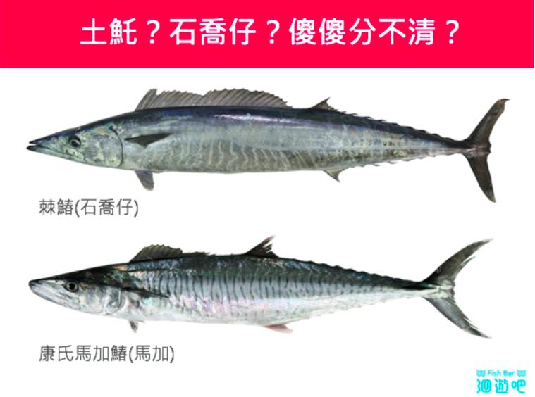 魚身的黑色線條較寬的是「棘鰆(東部土魠魚)」,而較細的則是「康氏馬加鰆(西部土魠...
