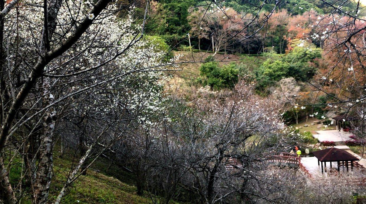 石門水庫「梅園」在山坡上俯瞰可以飽覽全景。 圖/北區水資源局提供