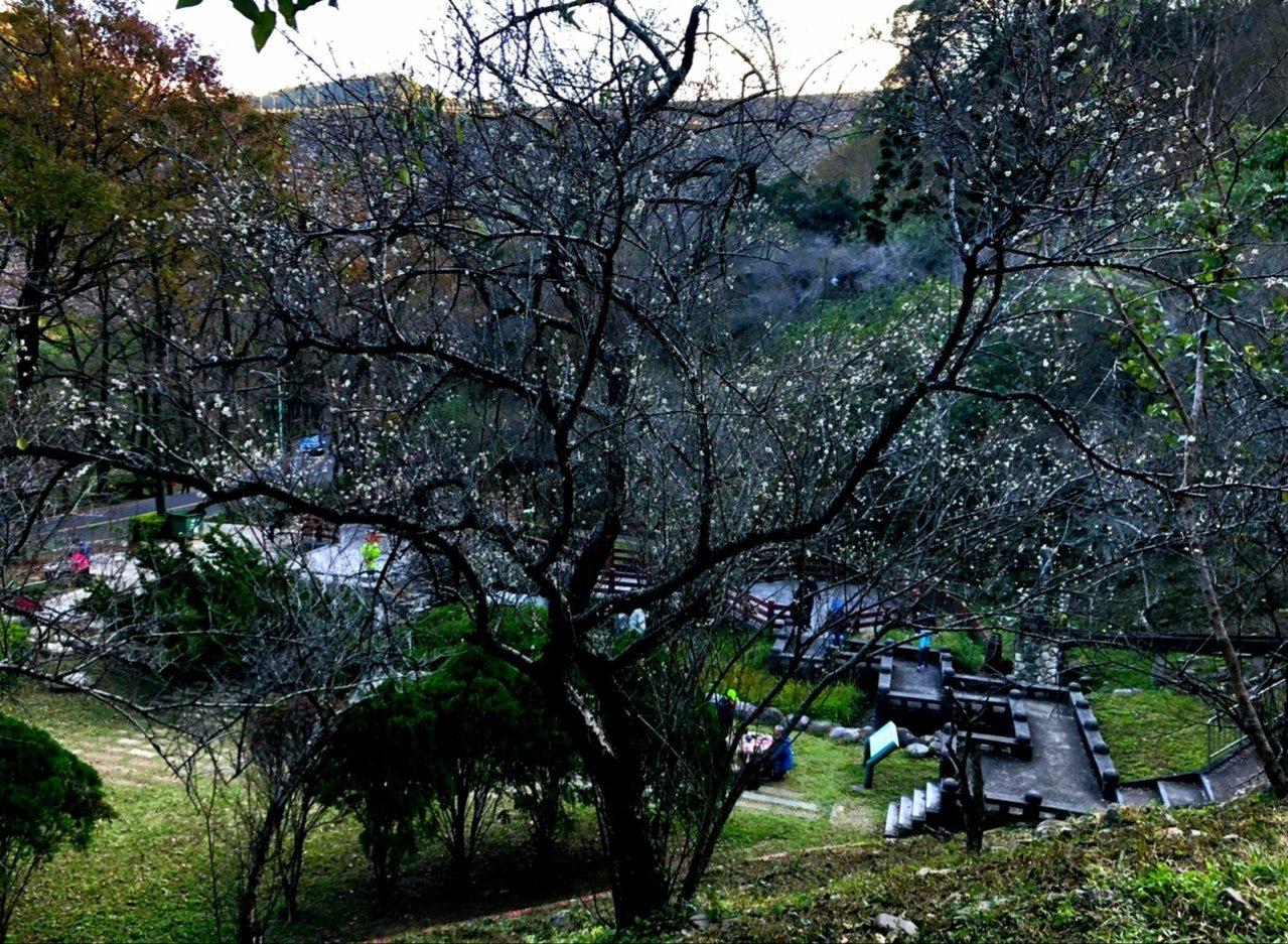 石門水庫梅園可以在樹下品茗聊天。 圖/北區水資源局提供