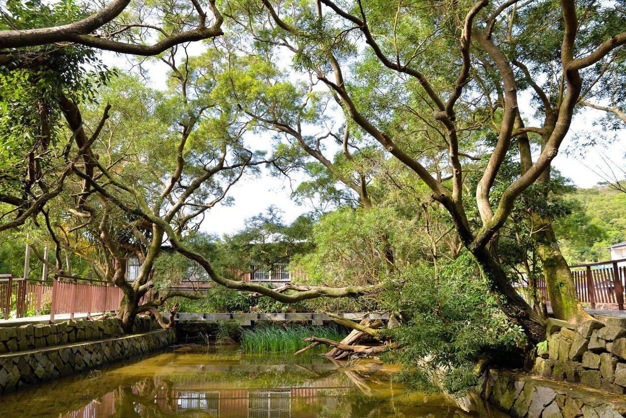 緩緩散步經過白石湖吊橋,行經生生不息的春秋步道,沿途可以發現有許多生物昆蟲棲息,...