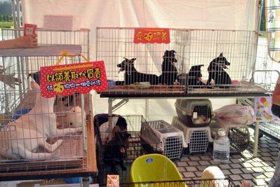 流浪動物之家基金會,積極推廣愛心認養。