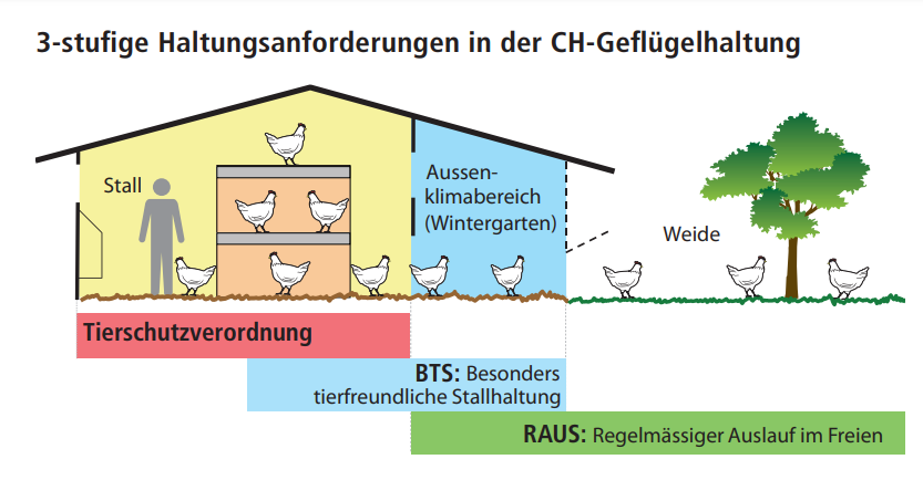符合動物友善養殖標準可獲得聯邦補助。紅色為蛋雞養殖最低要求 圖/Avifor...