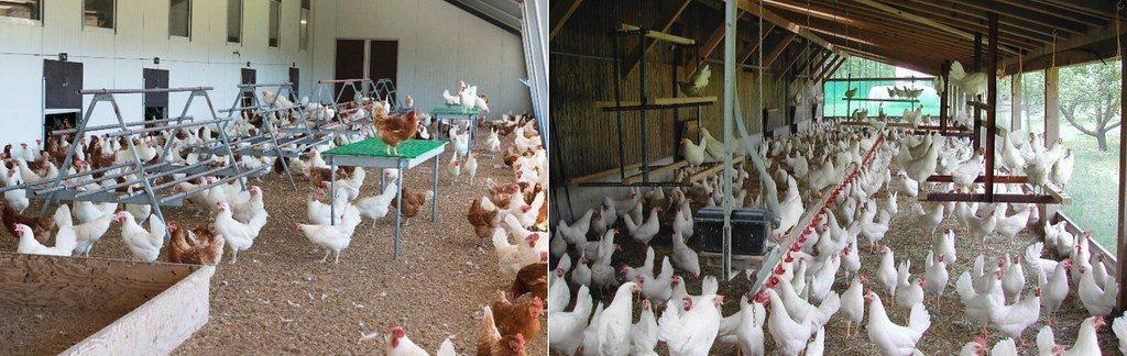 「特別友善動物養殖」(BTS)要求需有日光室(能接觸自然光、戶外空氣)。左圖的左...