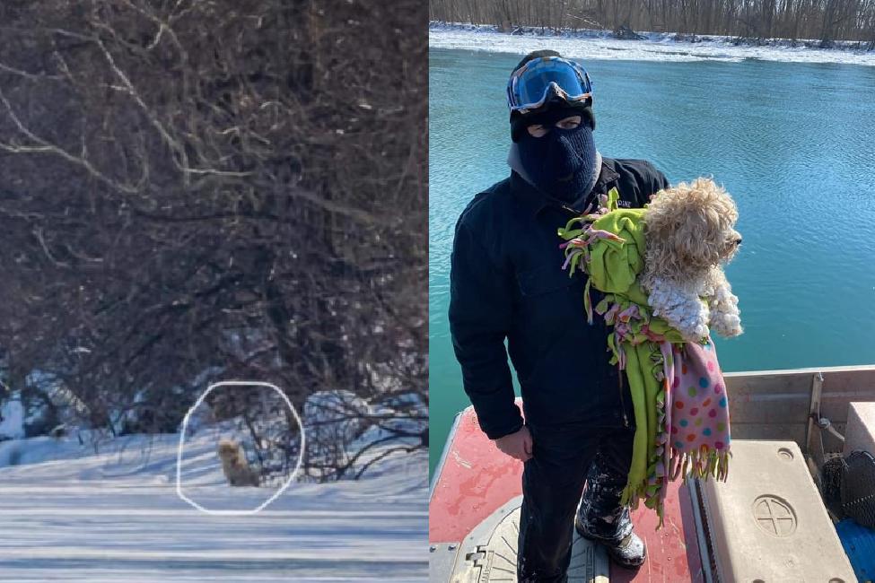 狗狗被困河冰4天性命垂危 救援隊出動裝備成功救起