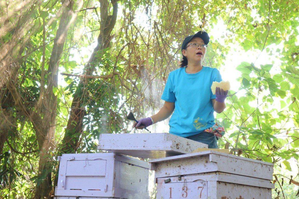 洪月英為了將養蜂那份情感以及天然的優質蜂蜜推廣給大眾,申請微型創業鳳凰貸款,規劃...