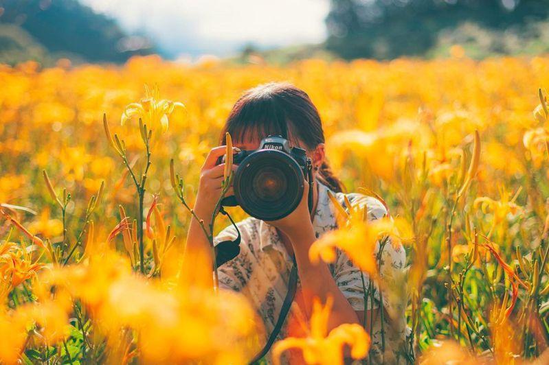 ▲全台黃色系景點推薦-六十石山金針花海。 (圖/weicen816, Instagram)
