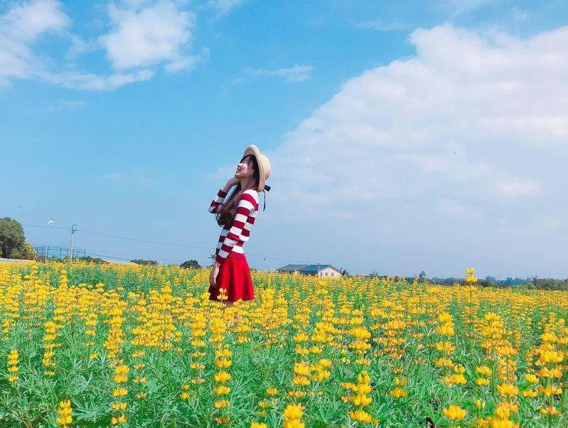 ▲全台黃色系景點推薦-苗栗八甲茶園魯冰花海。 (圖/betty83262006, Instagram)