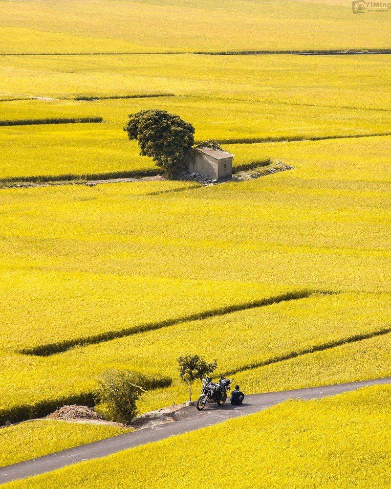 ▲全台黃色系景點推薦-外埔金黃忘憂谷。 (圖/bb211019, Instagram)