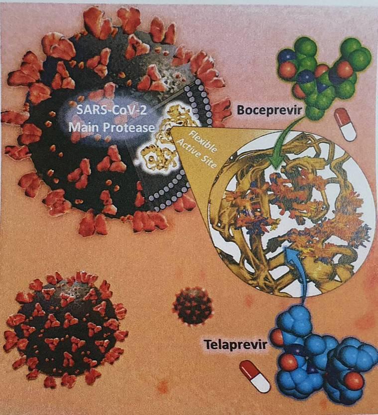 抗新冠病毒(SARS-CoV-2)藥物Boceprevir和Telaprevir...