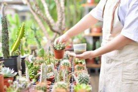 多肉植物進階DIY!連同盆器一起打造你喜歡的樣子