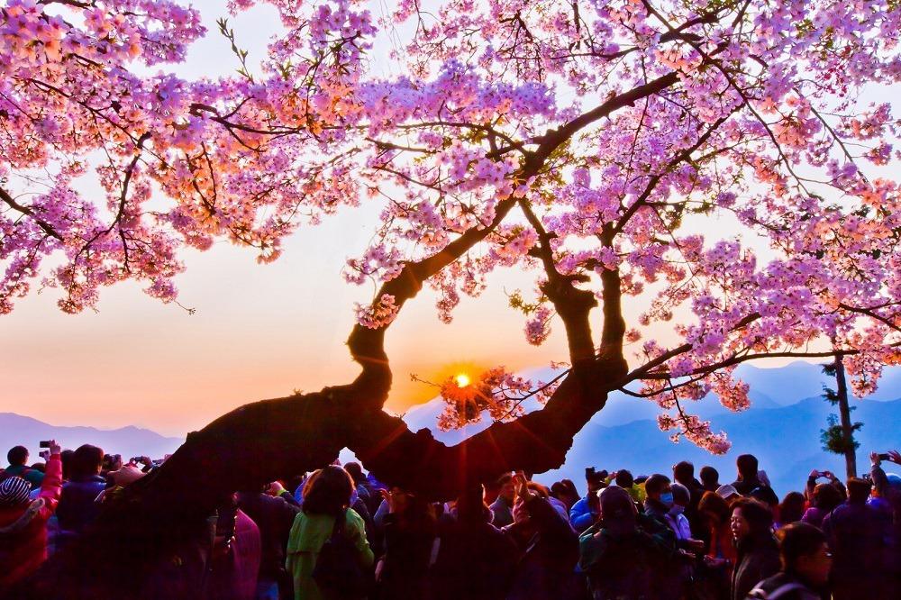 春來賞花!全台「5大賞花景點」推薦 美色超好拍