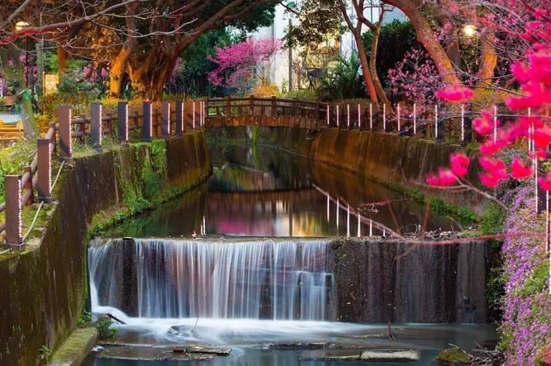 桃園市中壢區莒光公園內黃屋庄溪小型瀑布、櫻花倒映水中,形成「小橋流水」景象。圖/江長榮提供