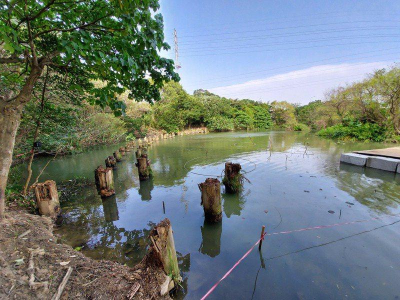 漳和濕地拆除舊有木棧道及搭建圍堰阻水設施,預計今年5月完成整修。圖/新北環保局提供