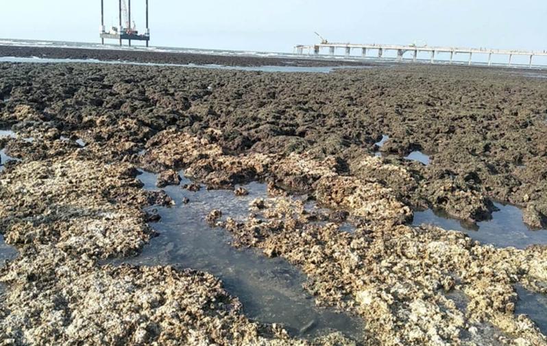 桃園市觀塘中油天然氣第三接收站施工,大潭藻礁破壞嚴重。記者曾增勳/攝影