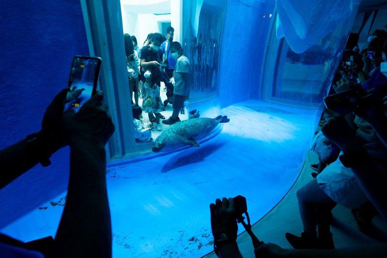 台灣防止虐待動物協會認為,Xpark未提供斑海豹任何遮蔽與躲藏空間。圖/台灣防止虐待動物協會提供