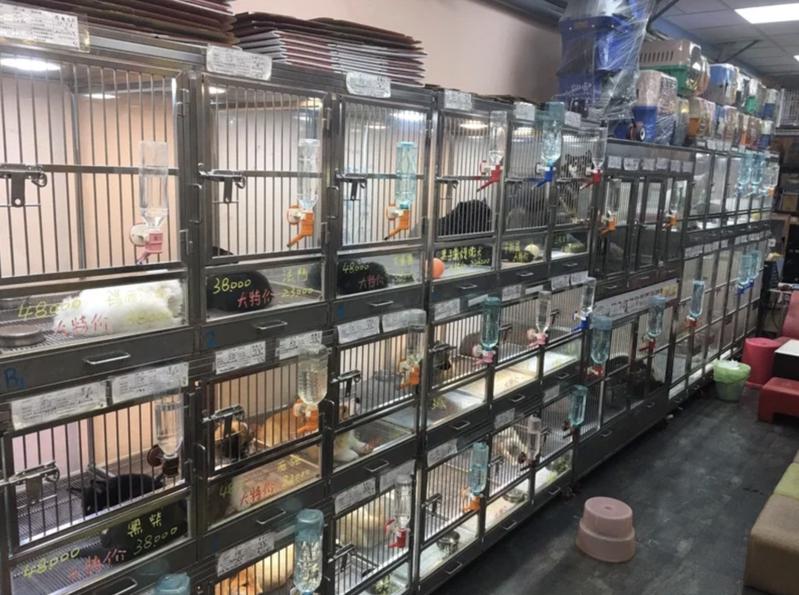 特定寵物(貓犬)業者許可證若到期仍持續販賣或寄養寵物,最高可罰300萬元罰鍰。圖/聯合報系資料照(示意圖)