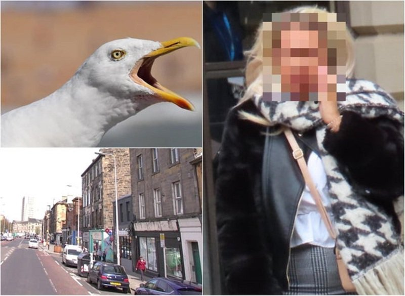 蘇格蘭愛丁堡郡法院近日審理一樁發生於2019年的離奇重傷害案,一對男女當街爆發爭執後,女方突然強吻男方,接著用牙齒狠狠扯掉一塊舌頭。一隻海鷗隨後立刻飛過來,將男方吐出的斷掉舌頭叼走後揚長而去。畫面翻攝:Edinburgh Evening News
