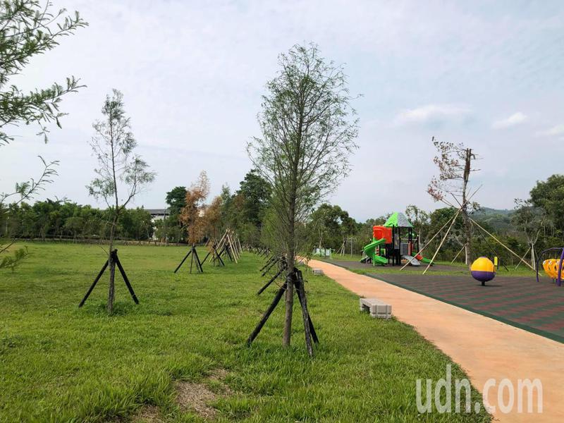 名間鄉苗圃生態公園已完成草皮、落羽松步道,暑假大型遊具設施完工,將成為首座共融公園。記者江良誠/攝影