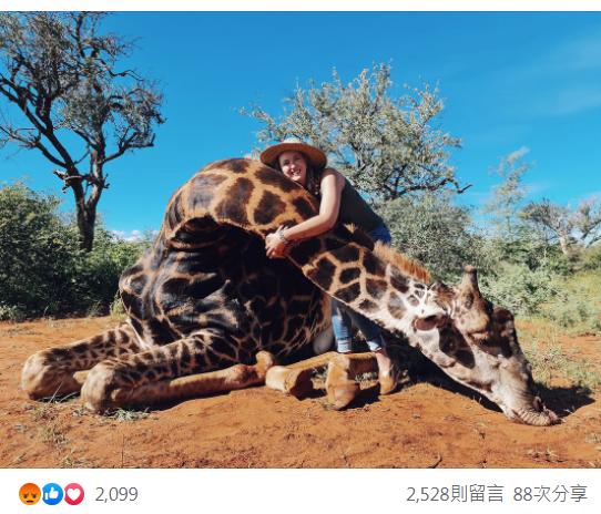 南非女獵人Merelize Van Der Merwe熱愛打獵,日前以狩獵一隻17歲長頸鹿作為慶祝情人節的禮物,更高舉牠的心臟打卡拍照,引來網友撻伐。圖擷自臉書@Merelizevdm