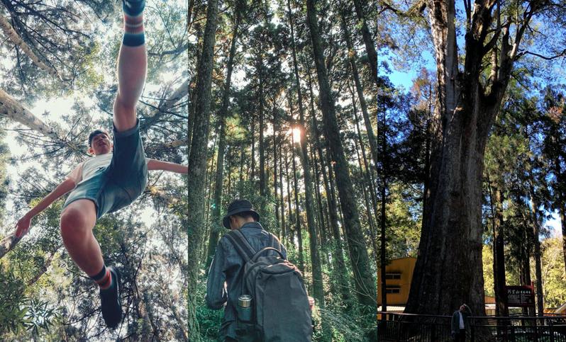 臺灣「五大」森林秘境景點,從滿山的衫林再到超狂的巨木群,帶領一起走到宛如「宮崎駿」系的山林之中。 圖/IG網友lanzeh授權 圖/IG網友daphne.tw授權 圖/旅遊美食特約萊點特別攝
