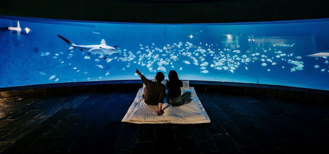 夜宿海生館認識海洋生物。  屏東海生館/提供