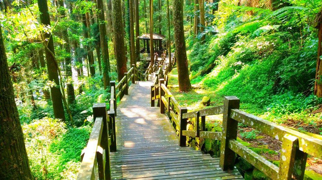 嘉義縣竹崎鄉奮起湖步道是阿里山區著名景點。圖/五工處嘉義所提供