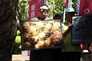 「藻礁公投」爭議釐清(上):三接已閃開藻礁?不蓋會導致缺電?