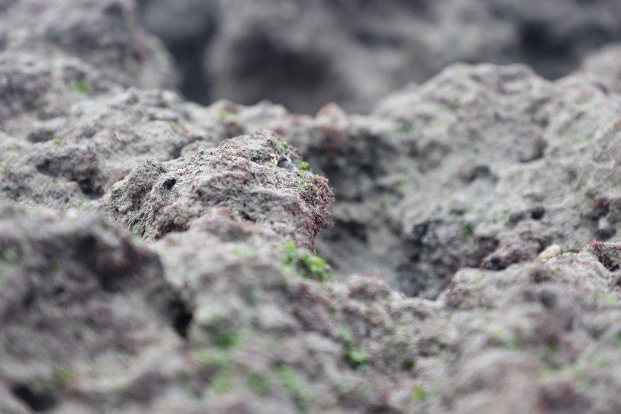 昨(3月1日)藻礁公投宣布通過連署門檻,很有希望成為今年8月公投的題目之一。圖為大潭藻礁。 圖/聯合報系資料照