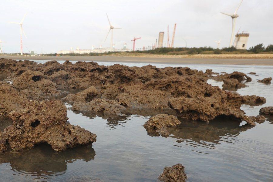 當年藻礁環評在極大的爭議中過關,是少數有環評委員退席甚至官員辭職明志的案件。圖為大潭藻礁。 圖/聯合報系資料照
