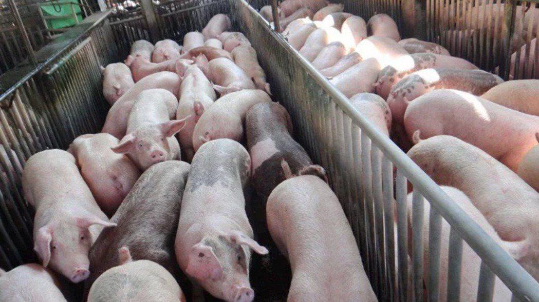 蘇貞昌報告猛讚陳吉仲,立定志願讓台灣豬農站起來。報系資料照
