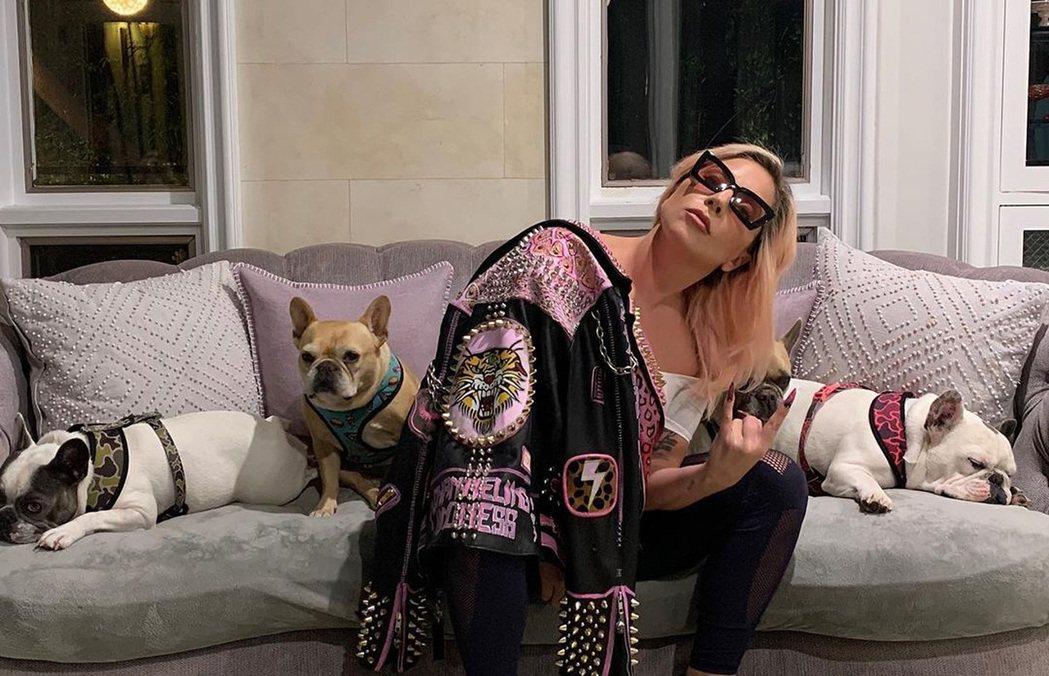 女神卡卡的3隻愛犬有2隻被搶走,她祭出重金懸賞。圖/摘自Instagram