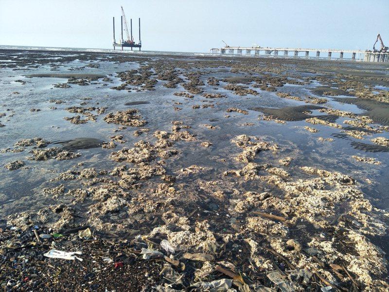 全國卅所大學學生發起「粉紅風暴」串連活動,力挺護藻礁公投案。本報資料照片