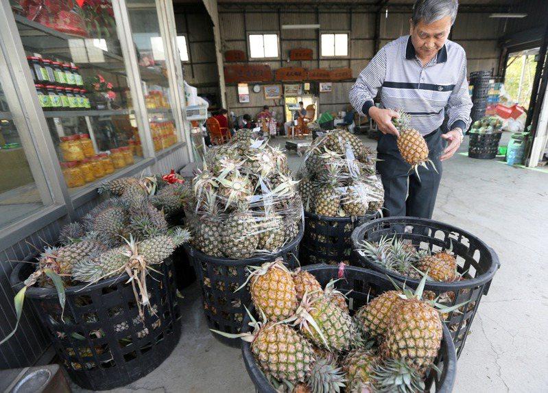 中國大陸3月起暫停台灣鳳梨輸入。記者劉學聖/攝影