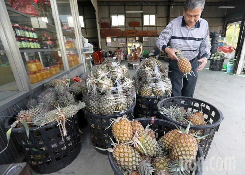 中國大陸宣布3月1日起,暫時停止我國生鮮鳳梨出口中國大陸,農委會預計砸10億確保鳳梨產地價格維持水準,並將提高外銷獎勵金鼓勵業者轉單至其他國家,同時加強內銷行銷力道。記者劉學聖/攝影