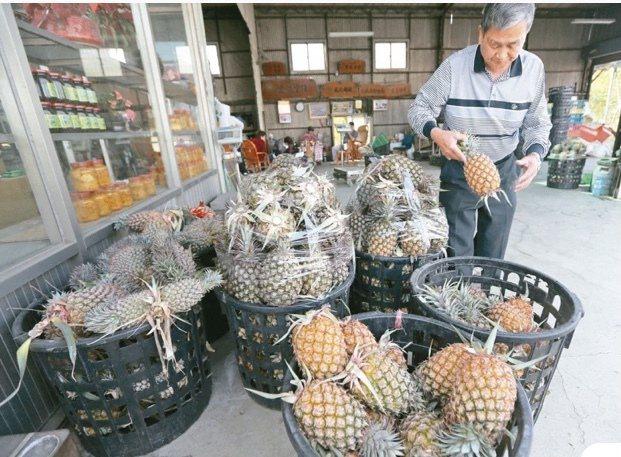大陸宣布暫停進口台灣鳳梨,引發國內鳳梨農「崩盤恐慌」。圖/本報資料照片