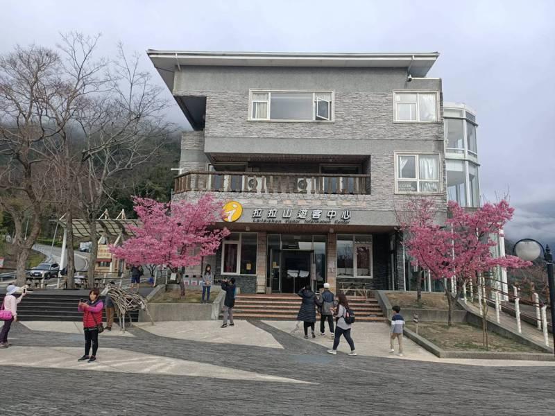 拉拉山遊客中心栽種櫻花也盛開,吸引民眾取景。圖/桃園市風景管理處提供