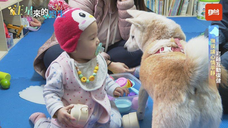 自2000年開始,台灣陸續引進動物輔助治療,讓家中「毛小孩」不再只是萌寵。記者王彥鈞/攝影