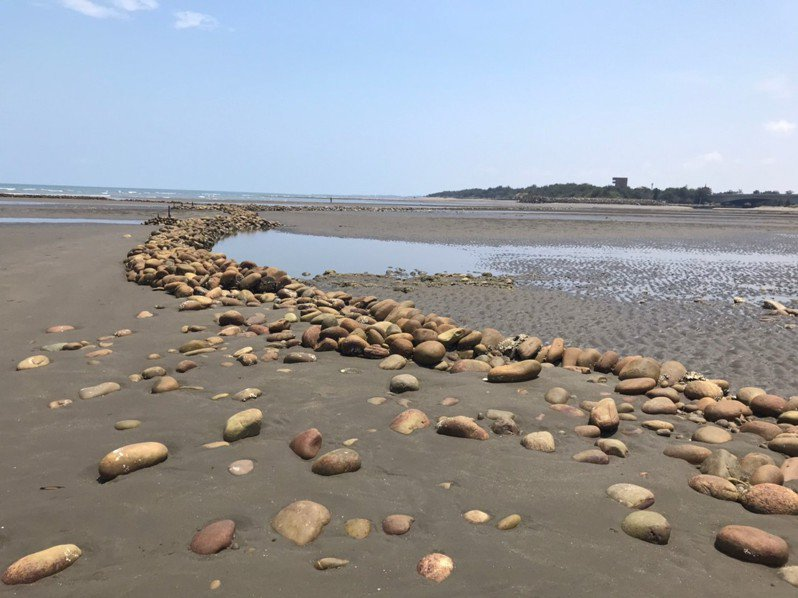 新豐石滬群近年毀壞速度加劇,用來穩固石滬群的蚵殼膠結毀壞速度加劇,膠結狀況崩解。圖/新竹縣政府提供