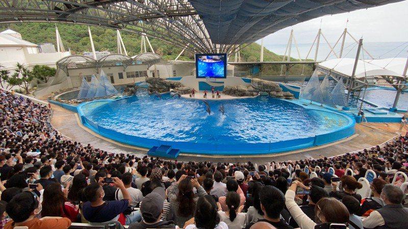 遠雄海洋公園預計今天入園人數約6500人左右,觀看海豚海獅表演的遊客將現場擠得水洩不通,仍不忘戴上口罩做好防疫措施。圖/遠雄海洋公園提供