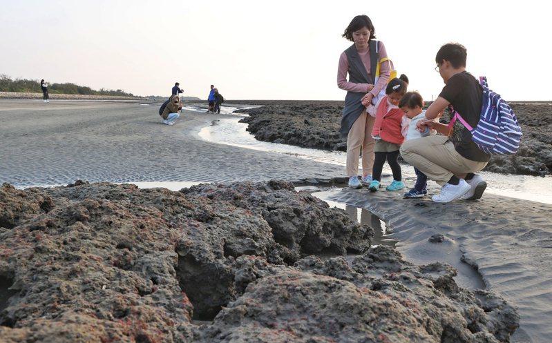 二二八連假第二天,不少民眾前往觀音外海觀察藻礁,大手牽小手,一同認識生態,了解如何自然共生。記者陳正興/攝影