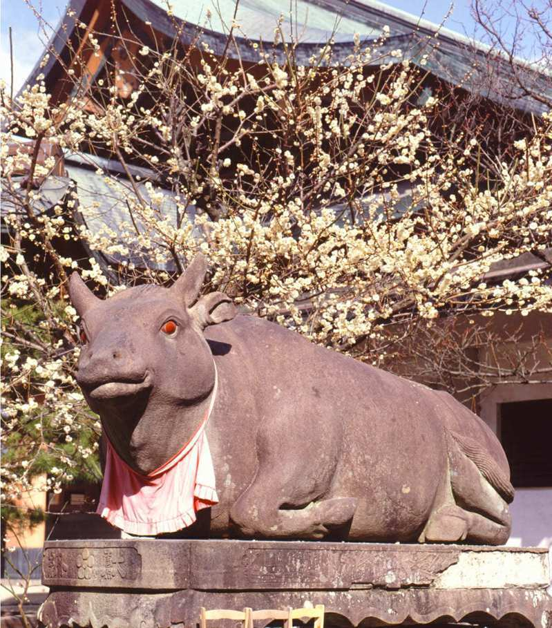 在北野天滿宮可見到為數眾多的石牛。圖/京都市台灣推廣事務所提供