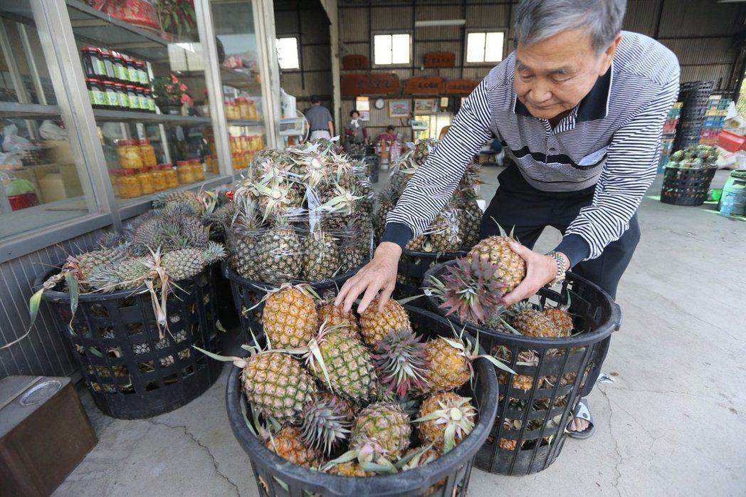 大陸海關總署決定自3月1日起暫停台灣鳳梨輸入大陸。(本報資料照)