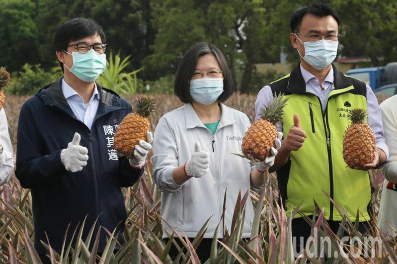 蔡英文總統(中)、農委會主委陳吉仲(右)等人昨天到高雄大樹鳳梨產區探視農民,也大啖新鮮鳳梨。本報資料照片