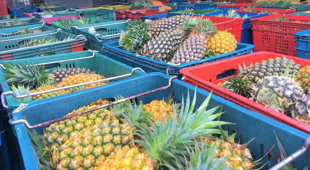 為提升鳳梨及高麗菜銷售,北農媒合各項管道來行銷推廣。聯合報系資料照